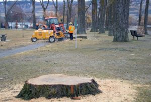#1 Tree Stump Removal in Sydney