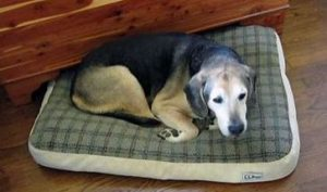 Choosing the Best Dog Beds For Canine Anxiety